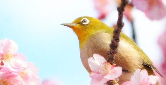 dreamdiary-bird