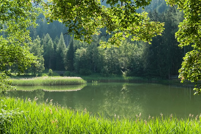 dreamdiary-Pond
