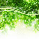 【ヒバ爆弾】防カビ・防虫・防湿これ一つ!天然『青森ヒバ』の底力