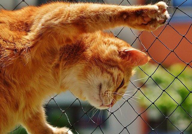 cat-1455463_640-1