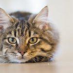 【Orijen】フリーズドライ犬用おやつ『オリジナル』で愛猫の食欲を取り戻した!