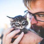 【日本製】岡野製作所の『ONSスリッカーブラシ』が愛猫の換毛期に大活躍!