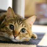 【SPORT PET】のキャッチ ミーイフ ユーキャンを愛猫へプレゼント