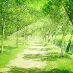 エンジェルナンバー【720】美しい道に踏み出しています