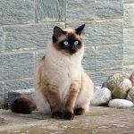 【グレインフリー】HAPPYCAT『カニンヘン』で愛猫のうさぎ好きが発覚!
