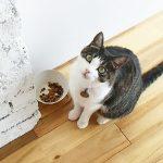 【全猫対応】『NaturalBalance ORIGINAL』の小分けタイプがいつでもフレッシュ!