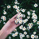 【花定期宅配】2回目の『ピュアフラワー』が秋らしく素敵